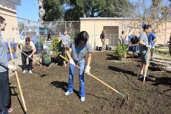 Honest Team Prepping Soil