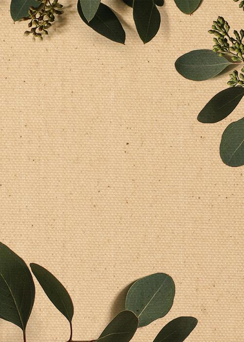 Eucalyptus on Canvas