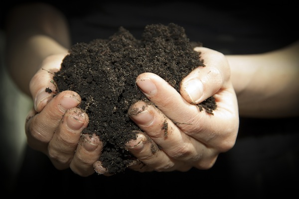 Composting Produces Rich Soil for Gardening
