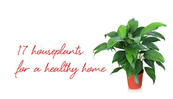 17 Houseplants for a Healthy Home