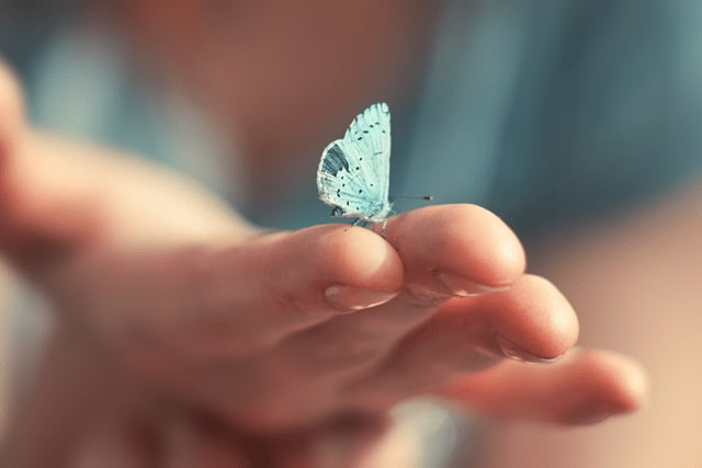 Blue butterfly landing in a hand
